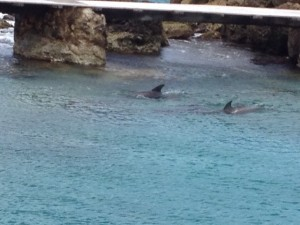 zwei Delphine in einer Bucht