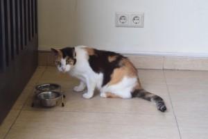 Katze beim Fressen aus dem Napf in der Hotellobby