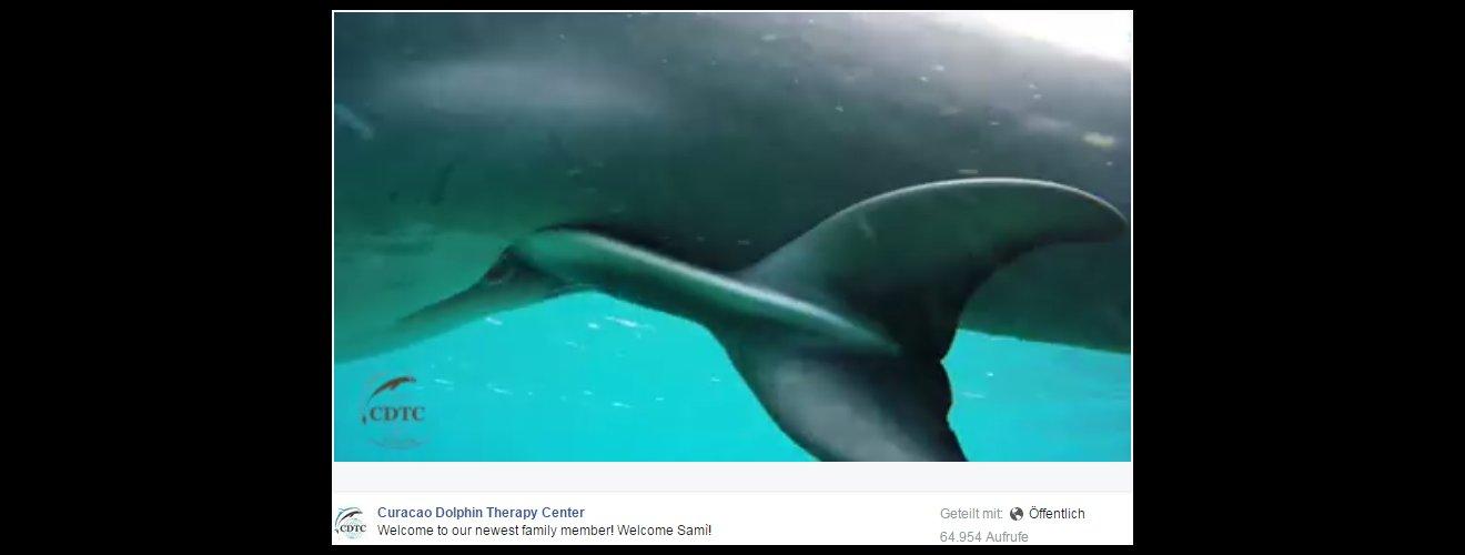 Screenshot von dem Video eine Delphingeburt im CDTS-Curaçao