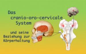 Kurs: Das Cranio-oro-cervicale System